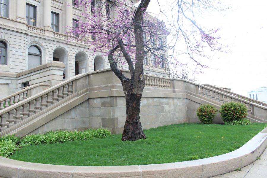 Spring marks return of famous C-shaped iris garden, tree blossoms