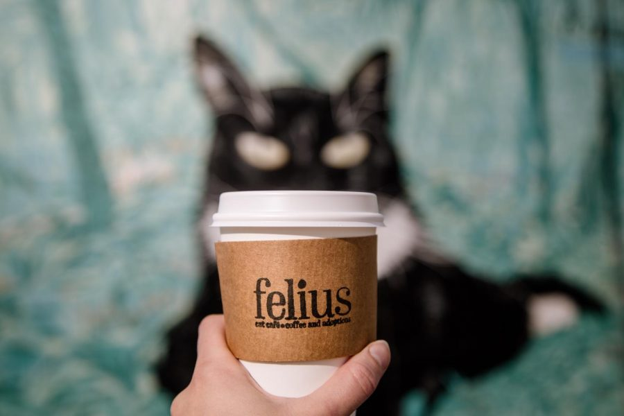 Omaha's first non-profit Cat Cafe